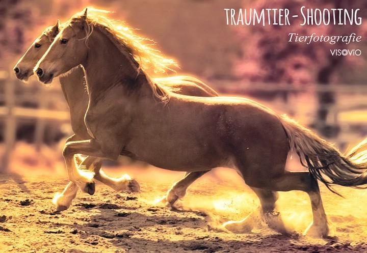 fuchsfriesen | visovio  fotografie & fotokunst | projekt traumtiere  fuchsfriesen, pferde, galopp, black pearls, friesen