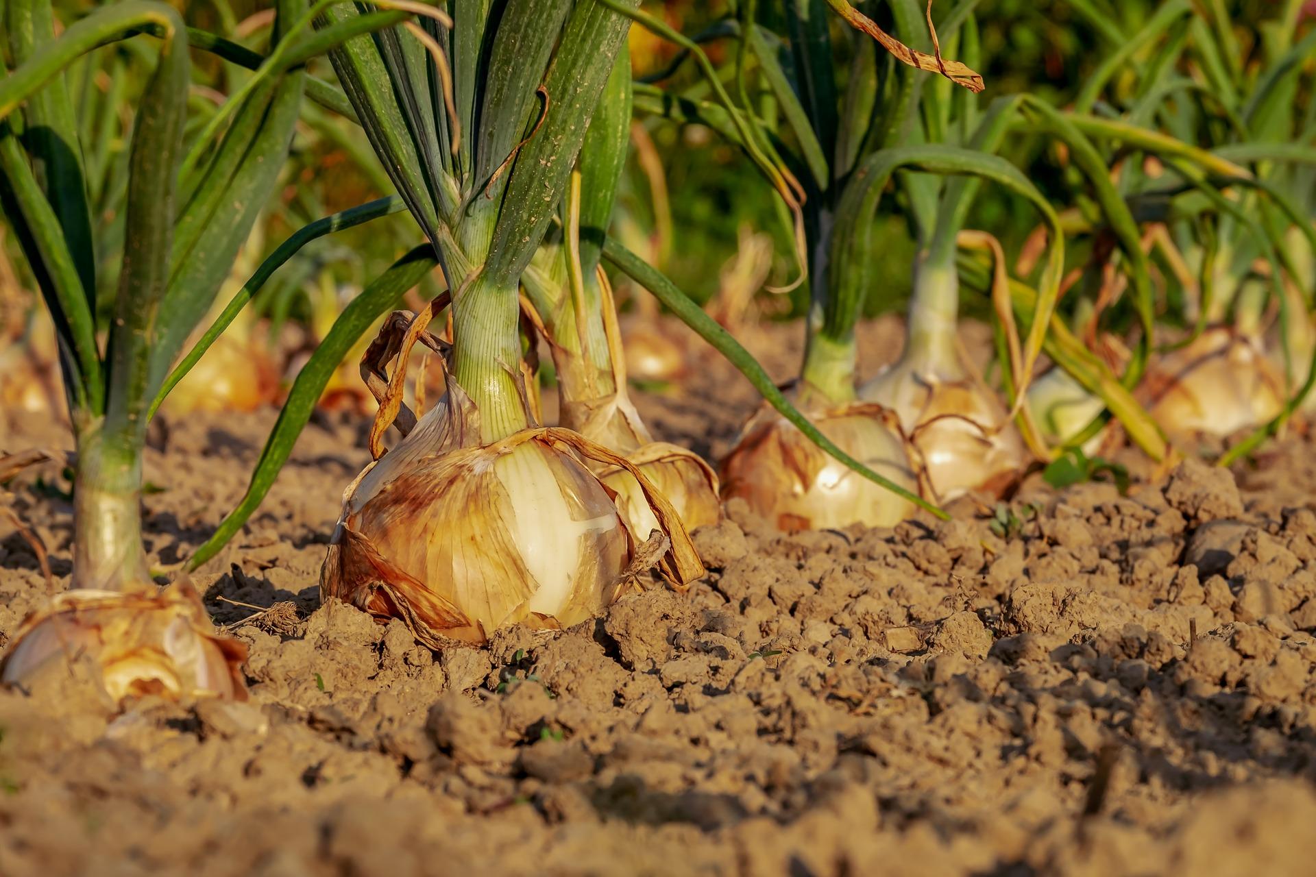 Land- und Forstwirtschaft im Blick: Viel Gesprächsbedarf zur GAP, Green Deal und Biodiversitätsstrategie