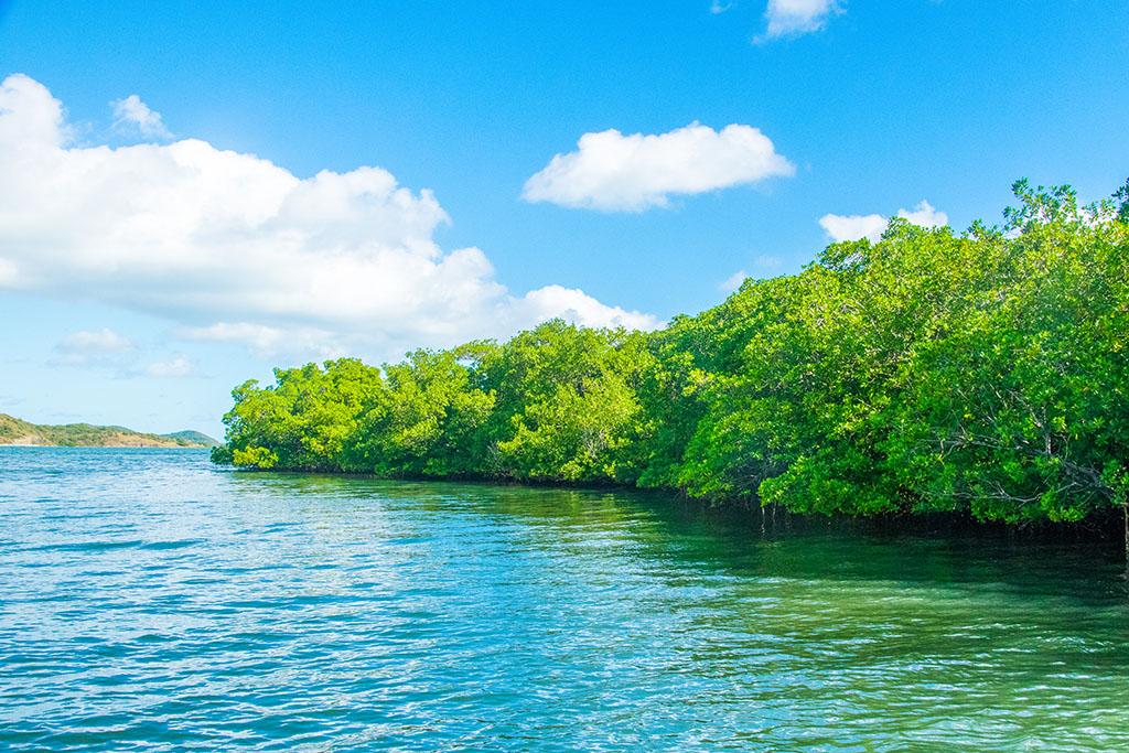 La mangrove Martinique - Balade en mer avec le Capitaine Romule