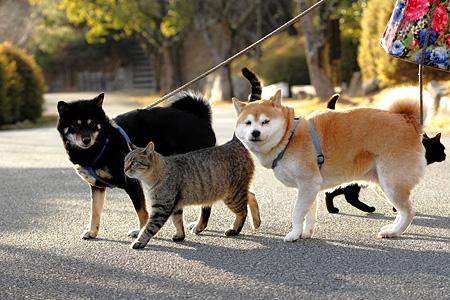 第5位 0204(151票)  清水信恒 「仲良し・飼い犬とノラネコのお散歩」