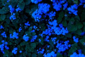 亀田 幸 「瑠璃の飛沫」