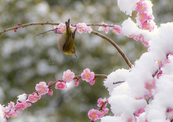 第1位 0507(193票) 野村 久美子 「早春賦」