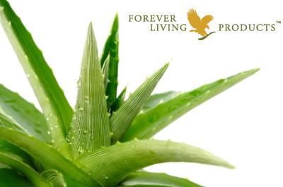 Aloe Vera für Tiere: die Königin der Heilpflanzen