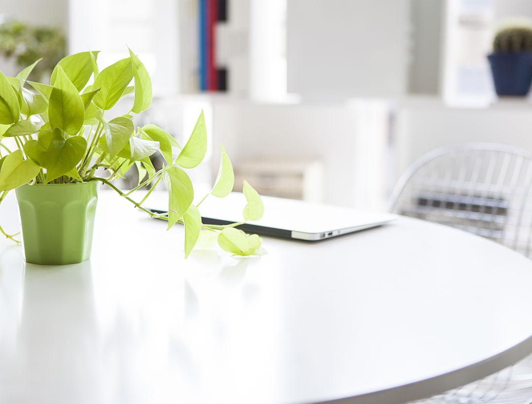 グリーンの観葉植物があるさわやかな事務所イメージ