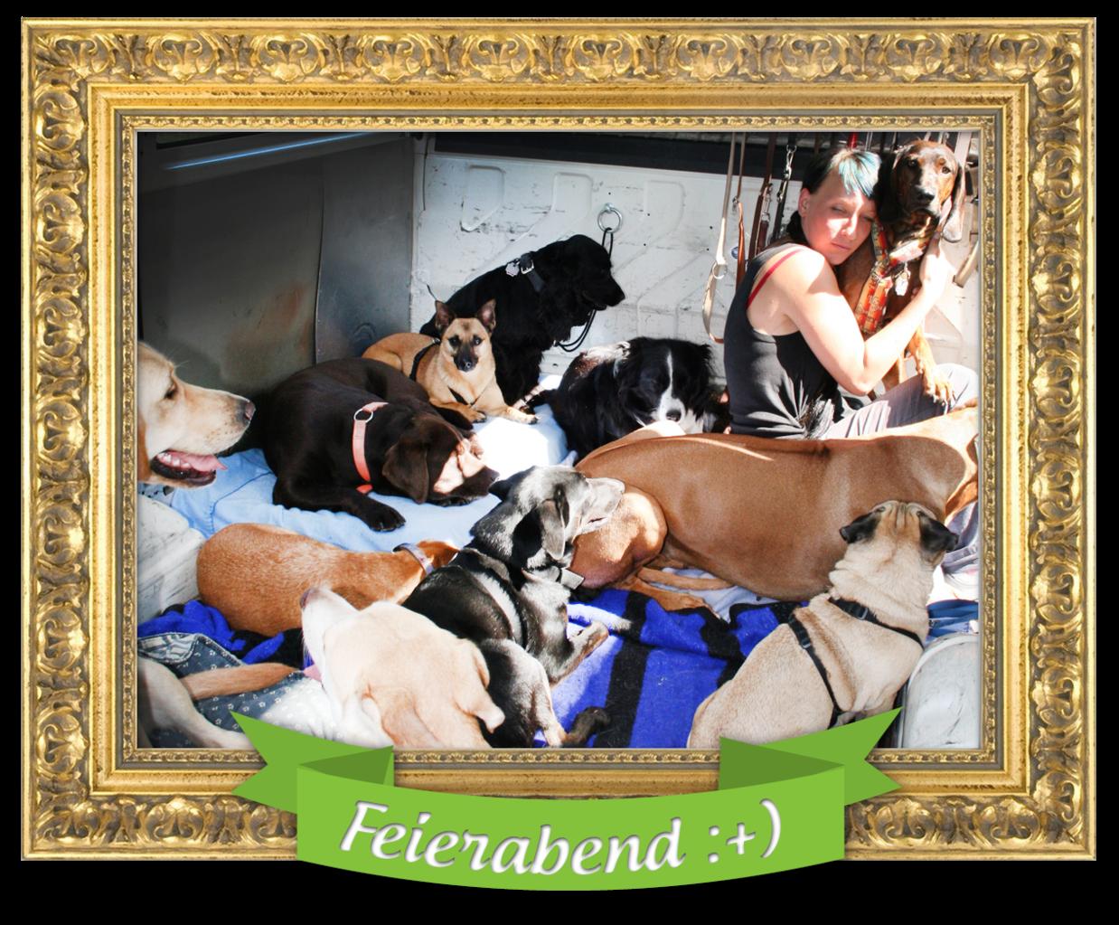 (c) Tierische-dienstleistungen.de