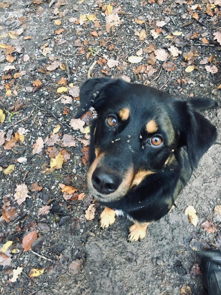 Lohnt es sich für deinen Hund, dir zu folgen?