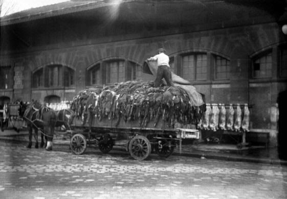 Une charrette remplie de peaux photographiée aux abattoirs de La Villette. vraisemblablement à destination de la halle. Les abattoirs de Vaugirard constituaient une autre source d'approvisionnement.