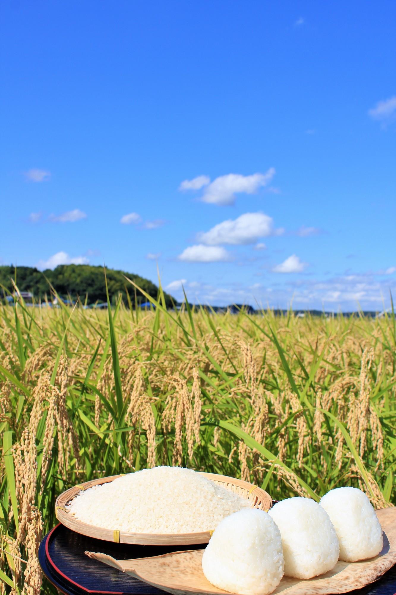宮城県登米産ひとめぼれ特別栽培米
