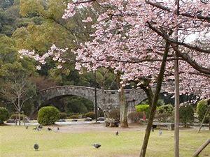 諫早公園桜満開
