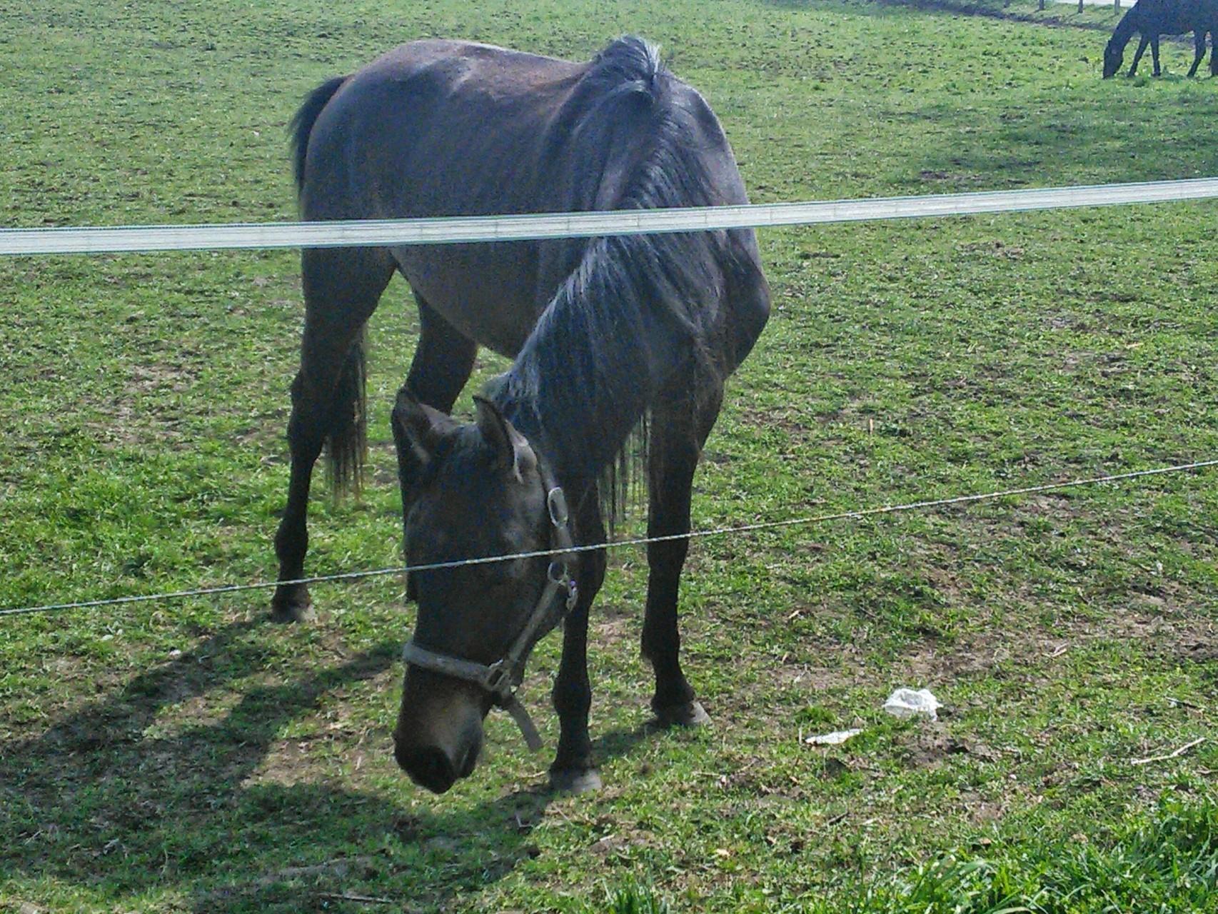 Ambiente Pferdekoppel VI