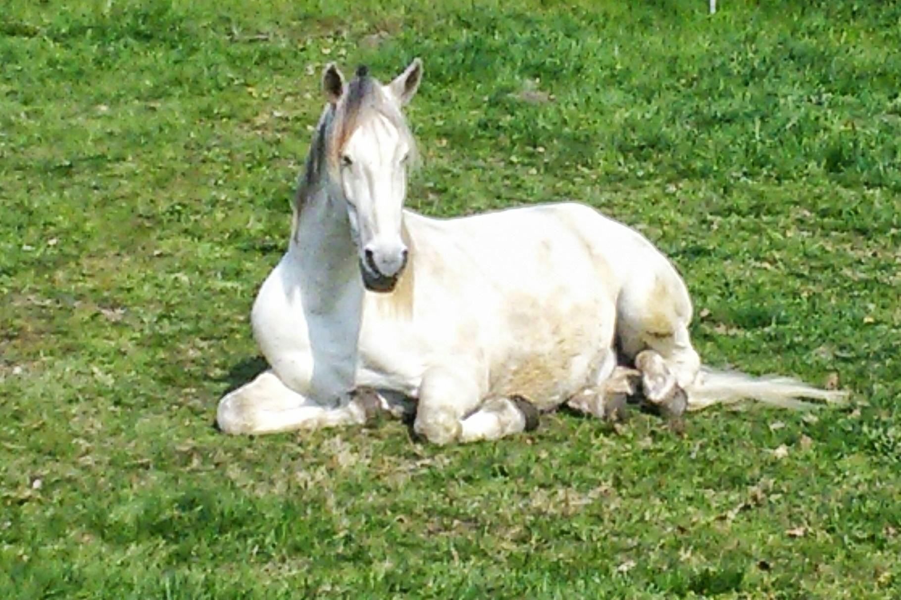 Ambiente Pferdekoppel V