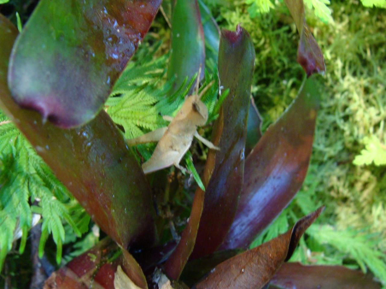 La micro biodiversidad