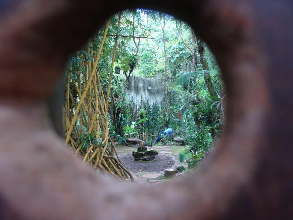 Ingresa al mágico reino de los musgos  Bichacue Yath Arte y Naturaleza
