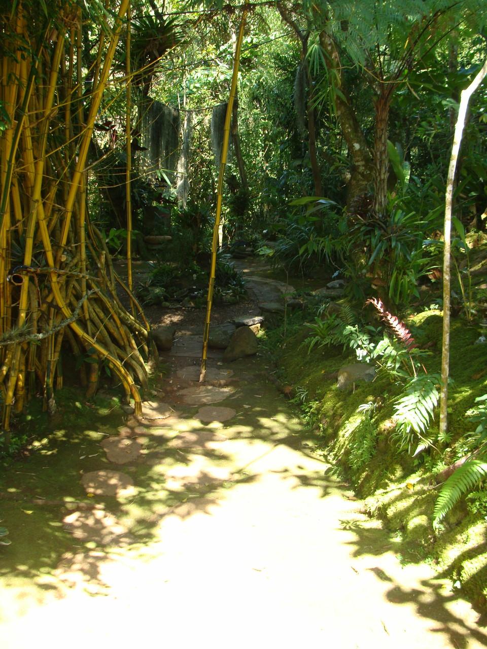 camino de entrada al mágico reino de los musgos.
