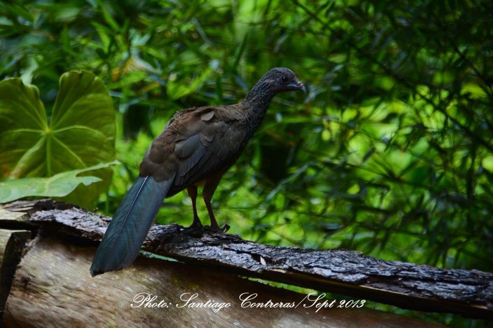 aves que pueden observar en nuestro mágico  reino de los musgos.