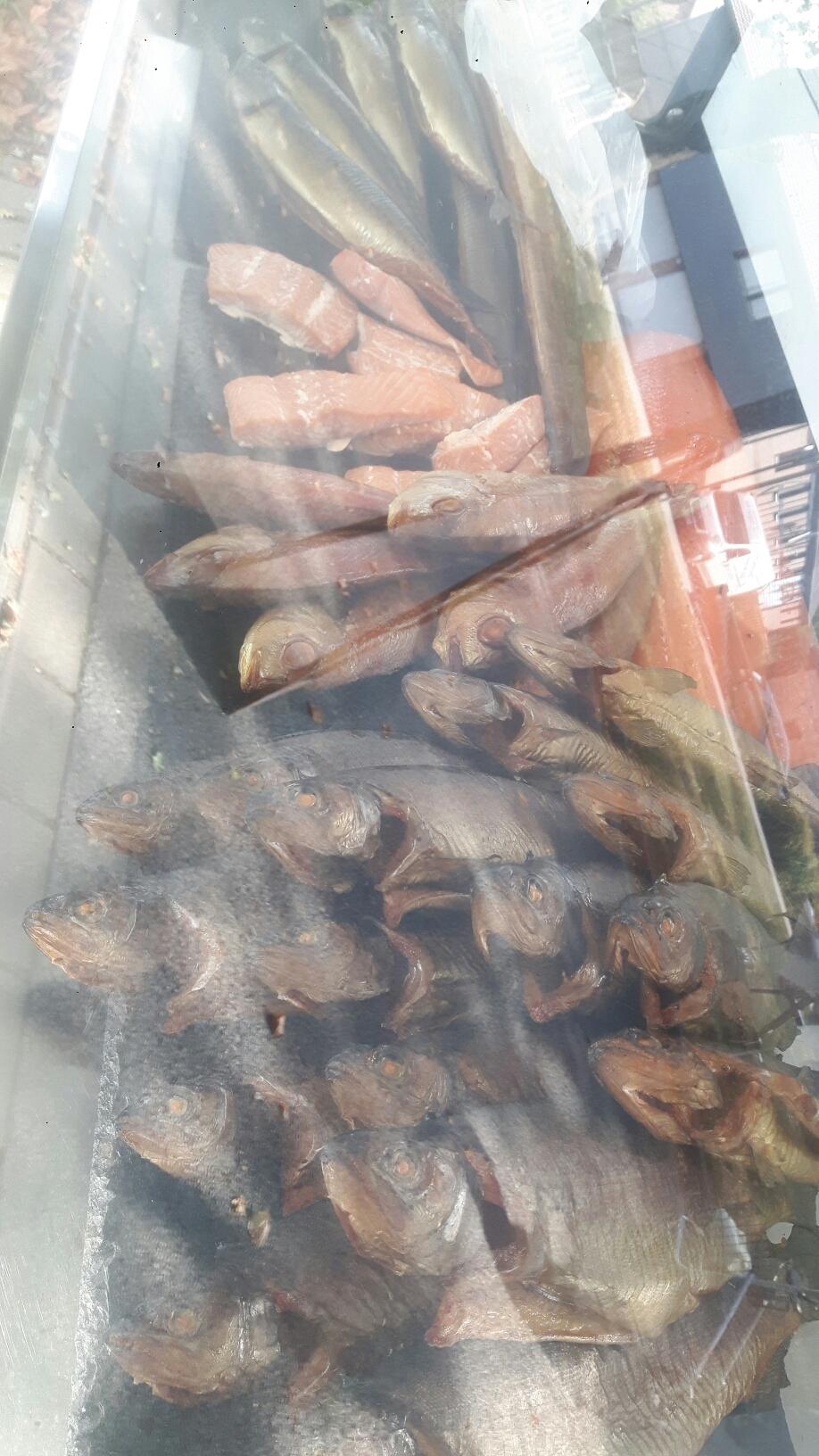 Forellen Lachs Makrele oder Dorade