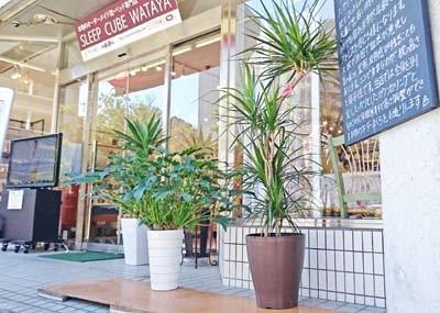 寒さにも強い観葉植物たち。マニフレックスは、マニステージ福岡へ。