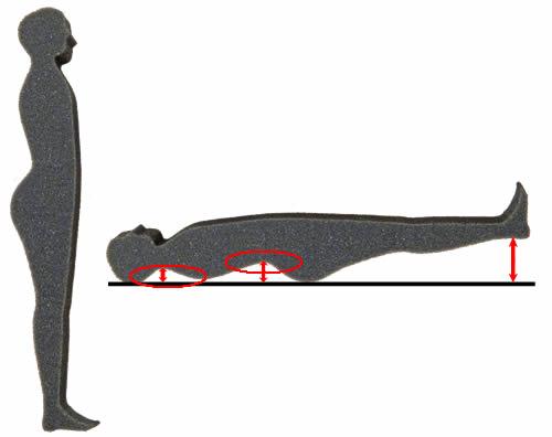 首から背中のラインを計測するとヒップタイプ / 西川リビングFIT LABO