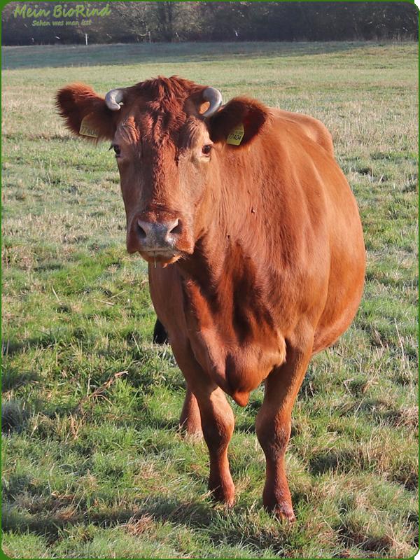 Rind 35 | Mein BioRind