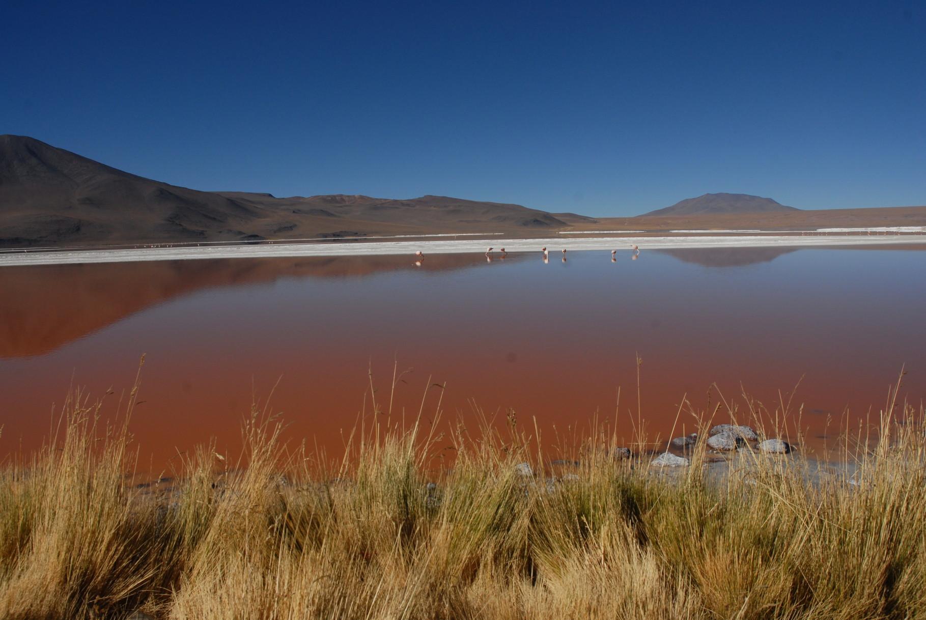 Die Laguna Colorada