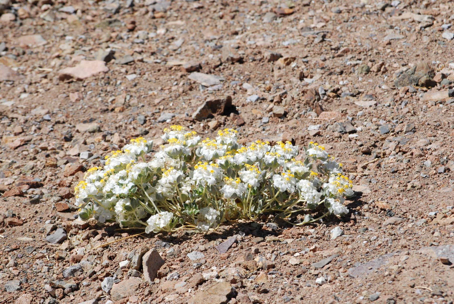 Ab und Zu wächst auch was in der Wüste