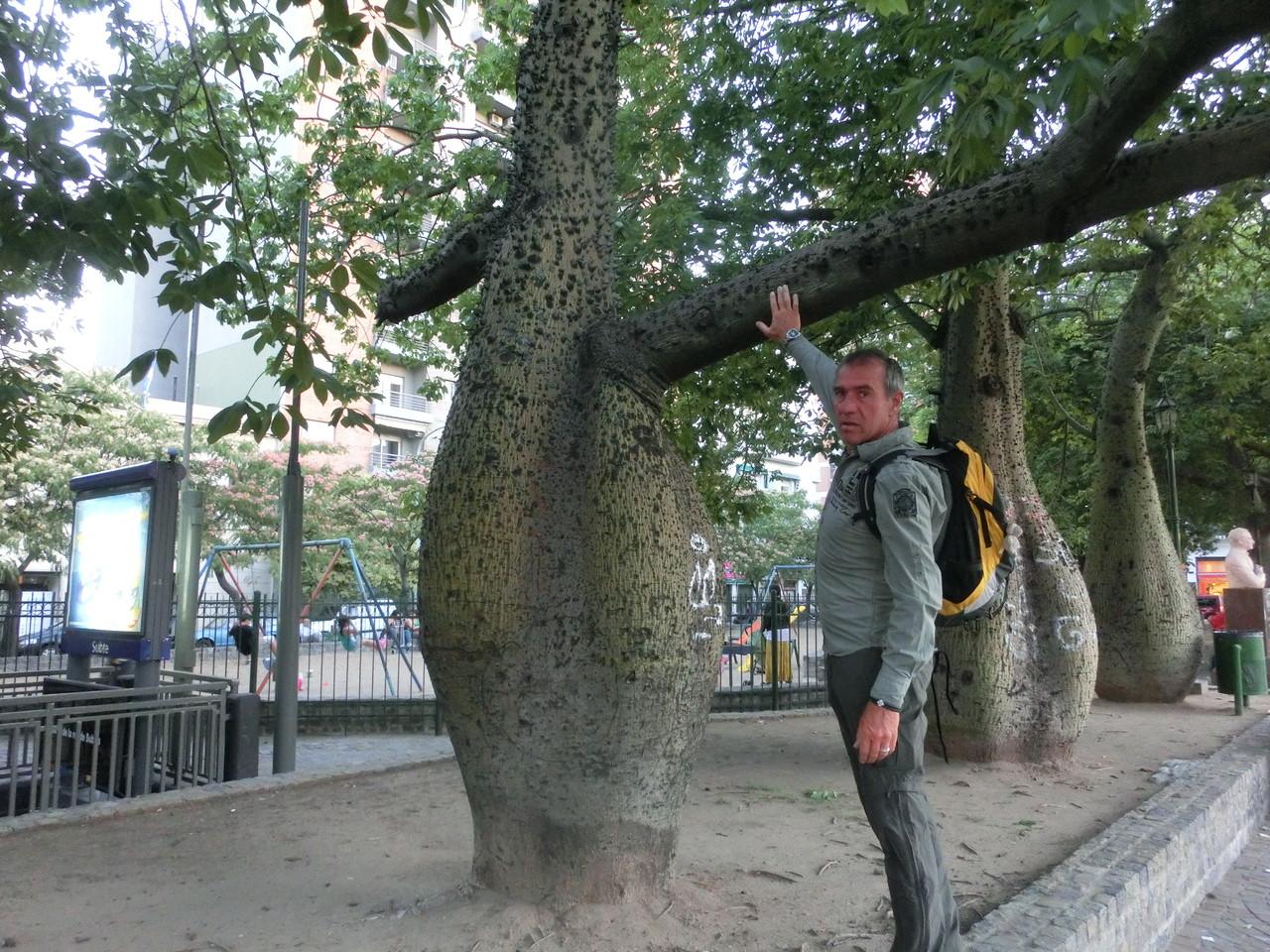 Solche Bäume haben wir auch noch nie gesehen