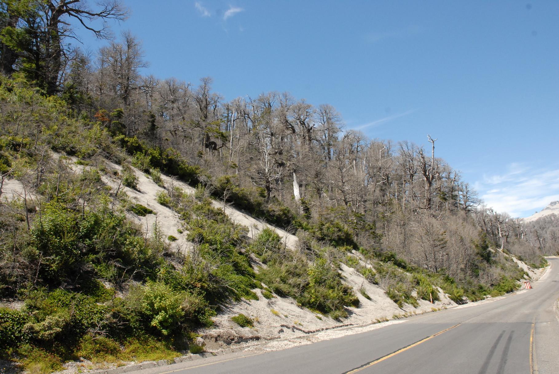 ... in der Nähe des Vulkans Puyehue