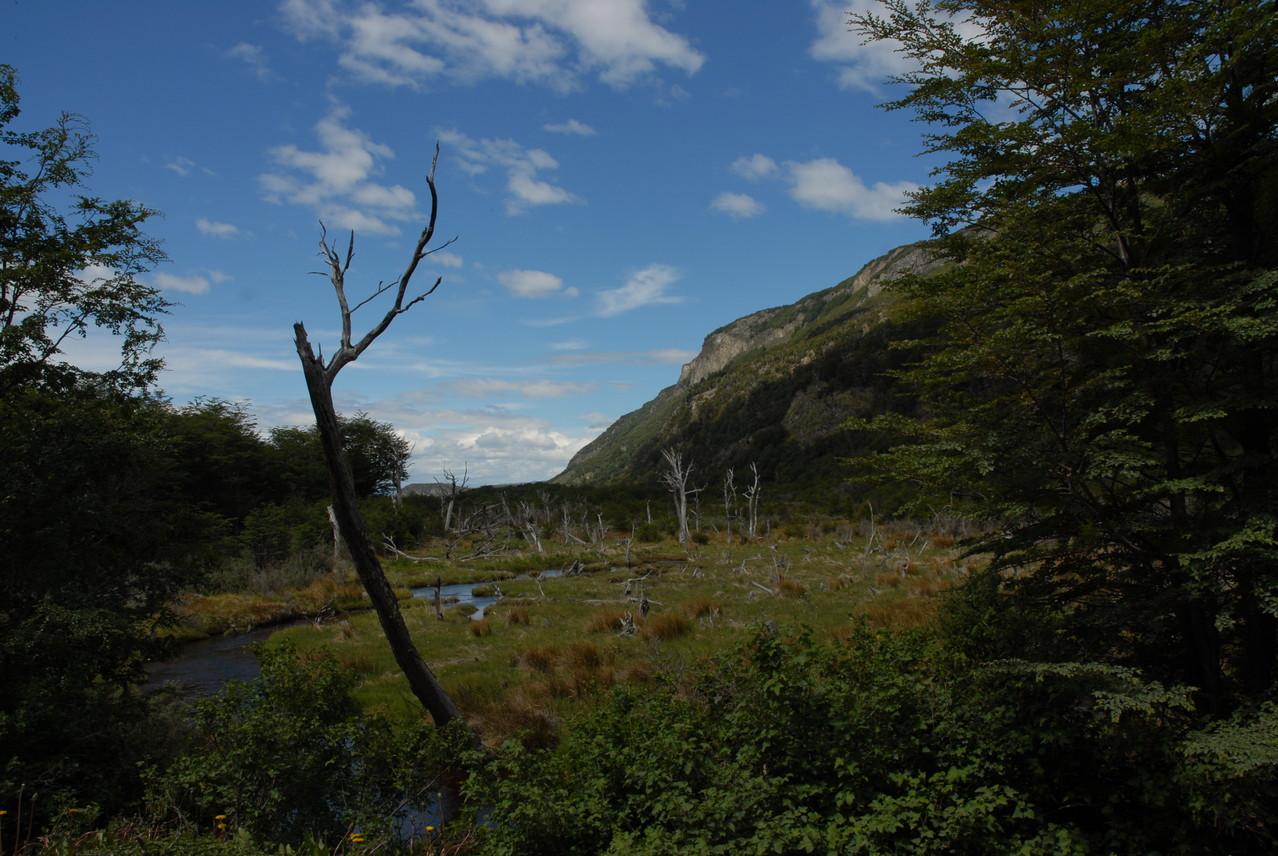 Sumpflandschaft im Park