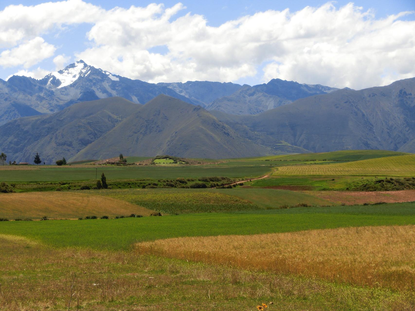 Peruanische Felder