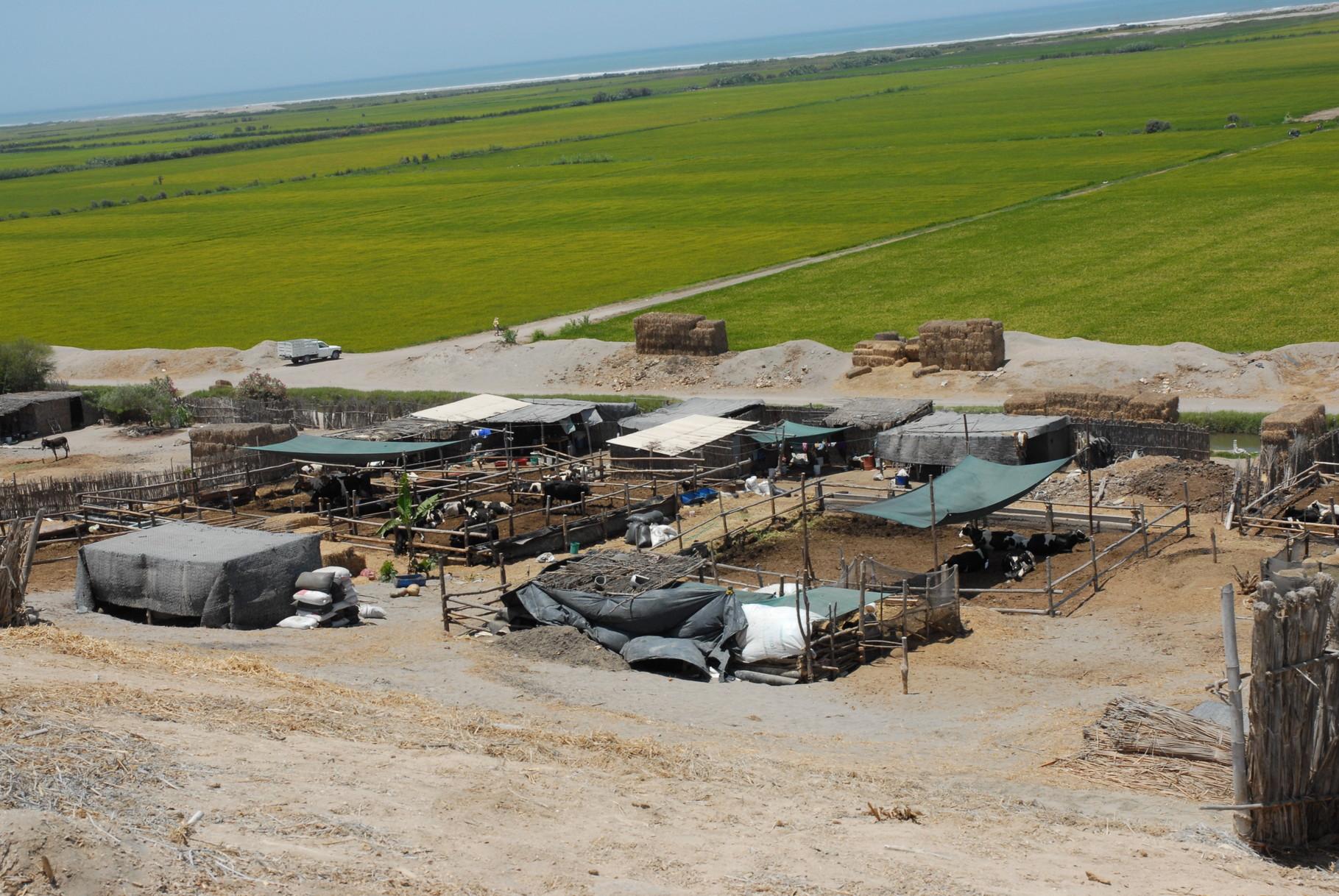 ... mit peruanischem Bauernhof