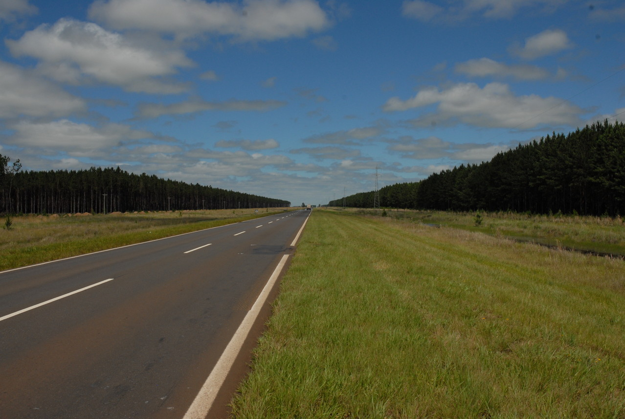 Kilometerlange Wälder
