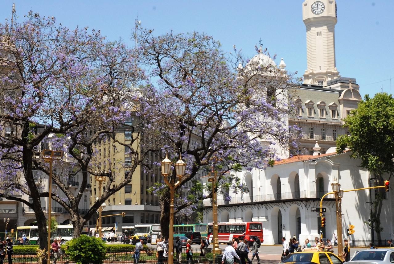 wunderschöne Fliederbäume in de ganzen Stadt, so auch vor dem Cabildo