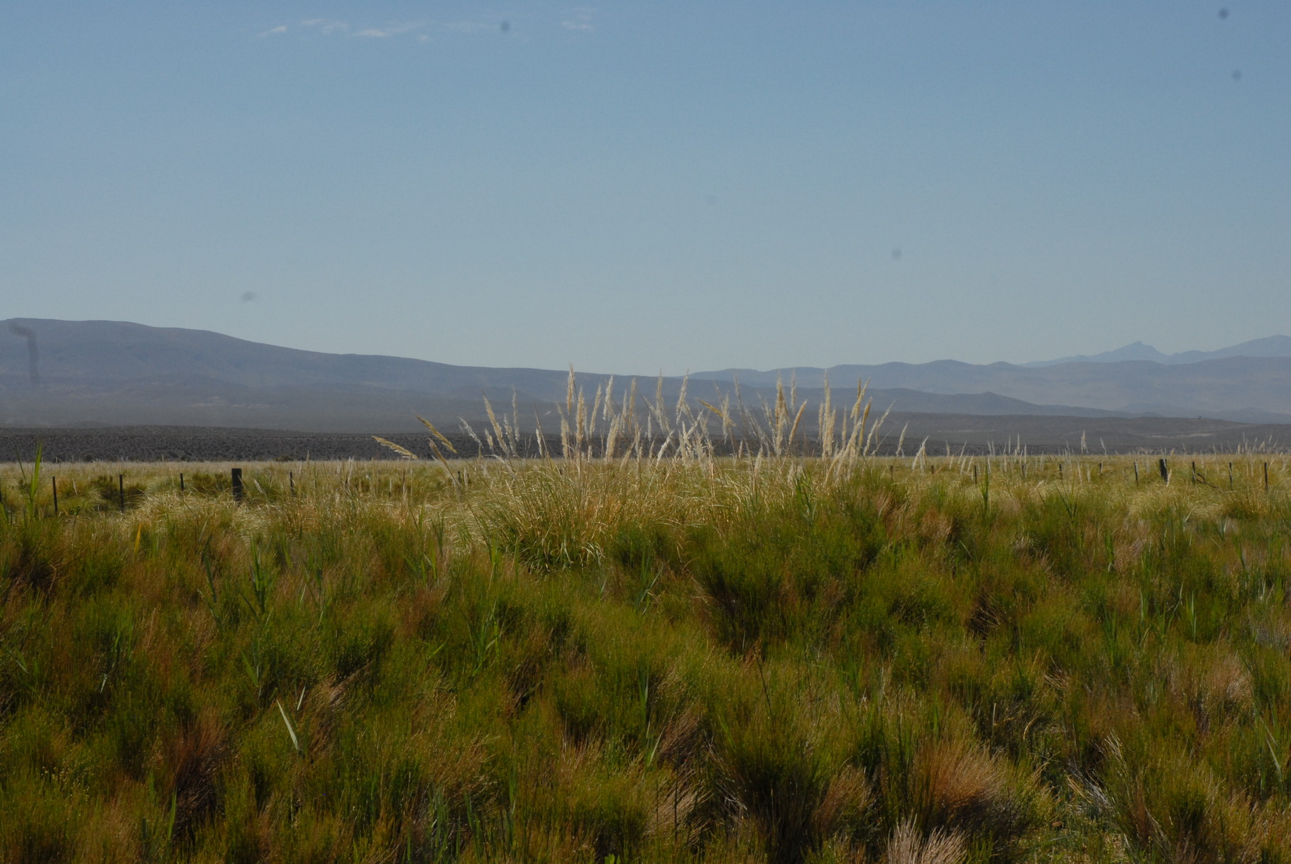 Im Hintergrund verschiedene Cerros
