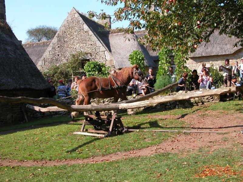 Cheval au manège entrainant le broyeur à pommes