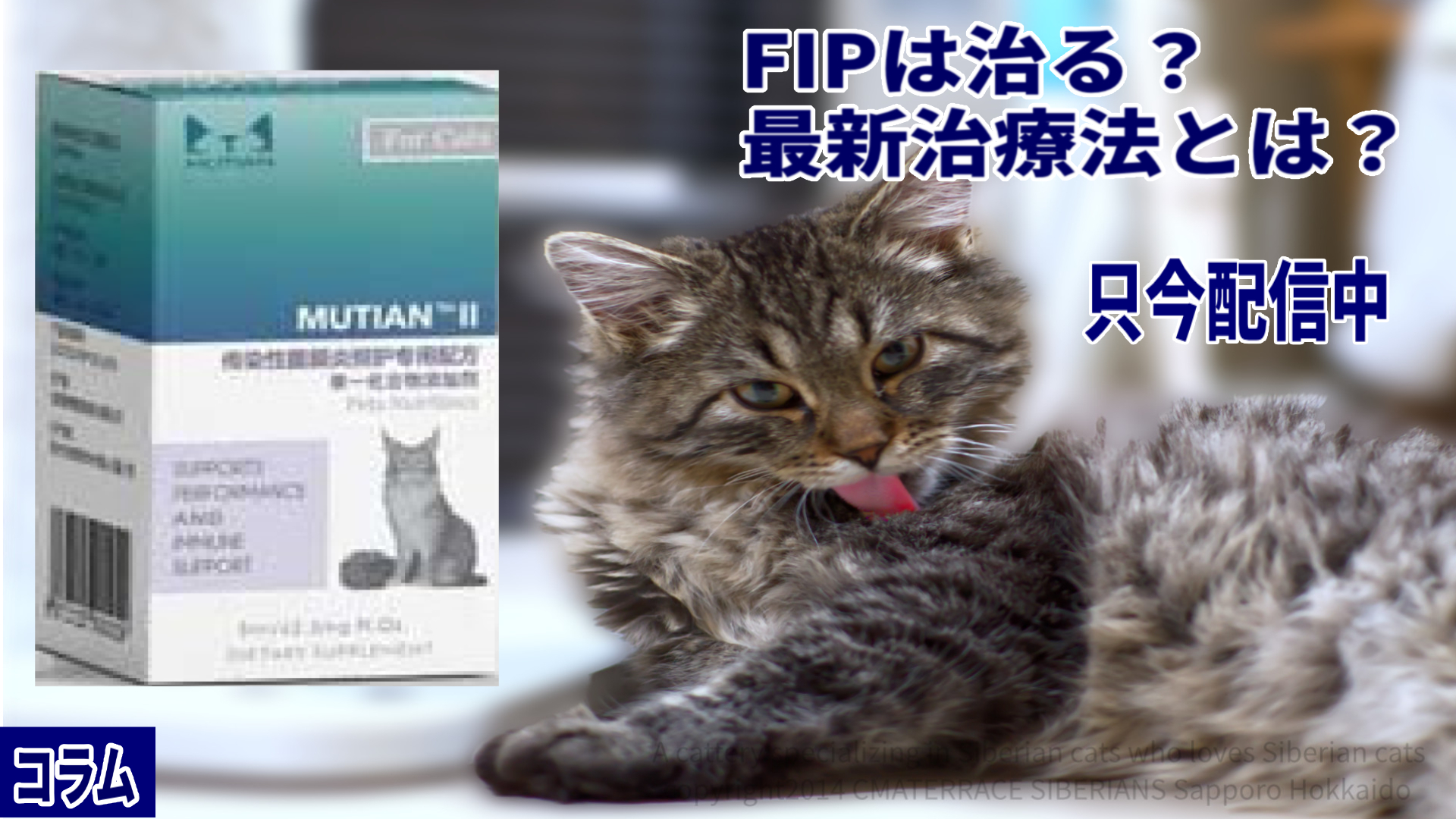 FIPは治る?最新治療法とは?