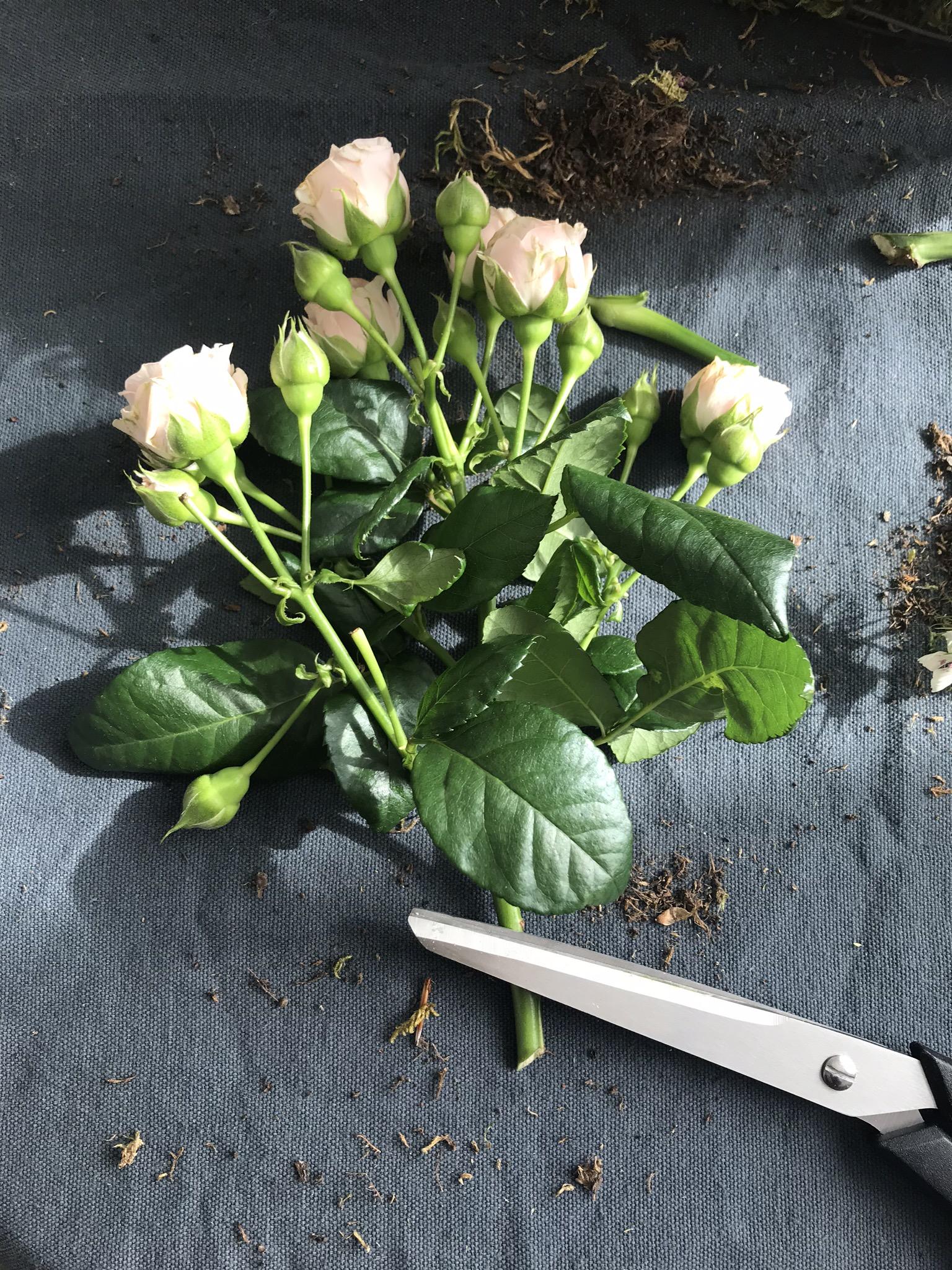 Couper les fleurs, et leur laisser le plus long de tige possible