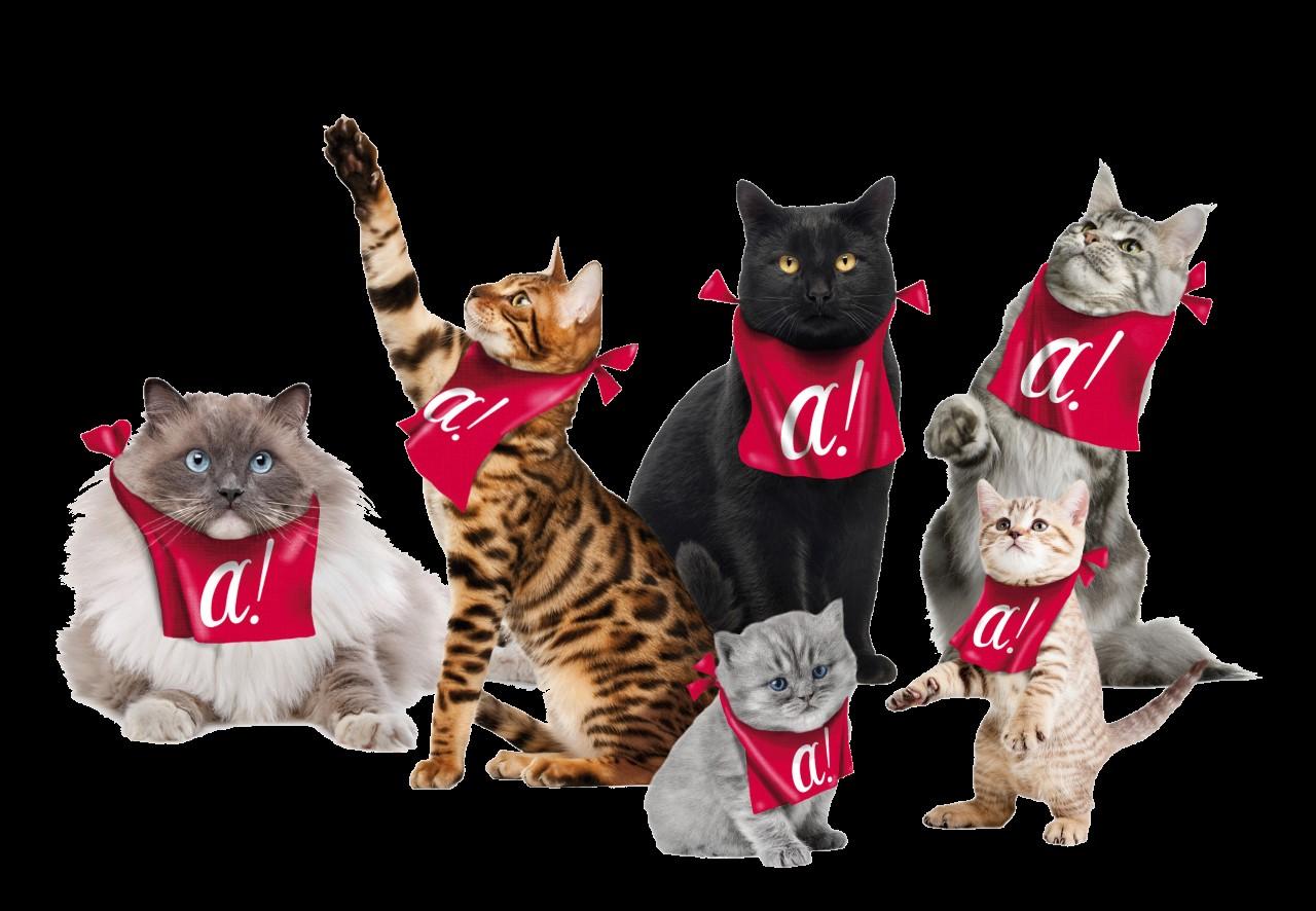 Liens éleveurs - Elevage de chat Norvégien, chatons à ...