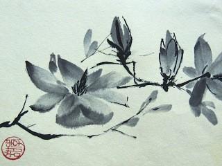 Lentehart : magnolia in vrije stijl