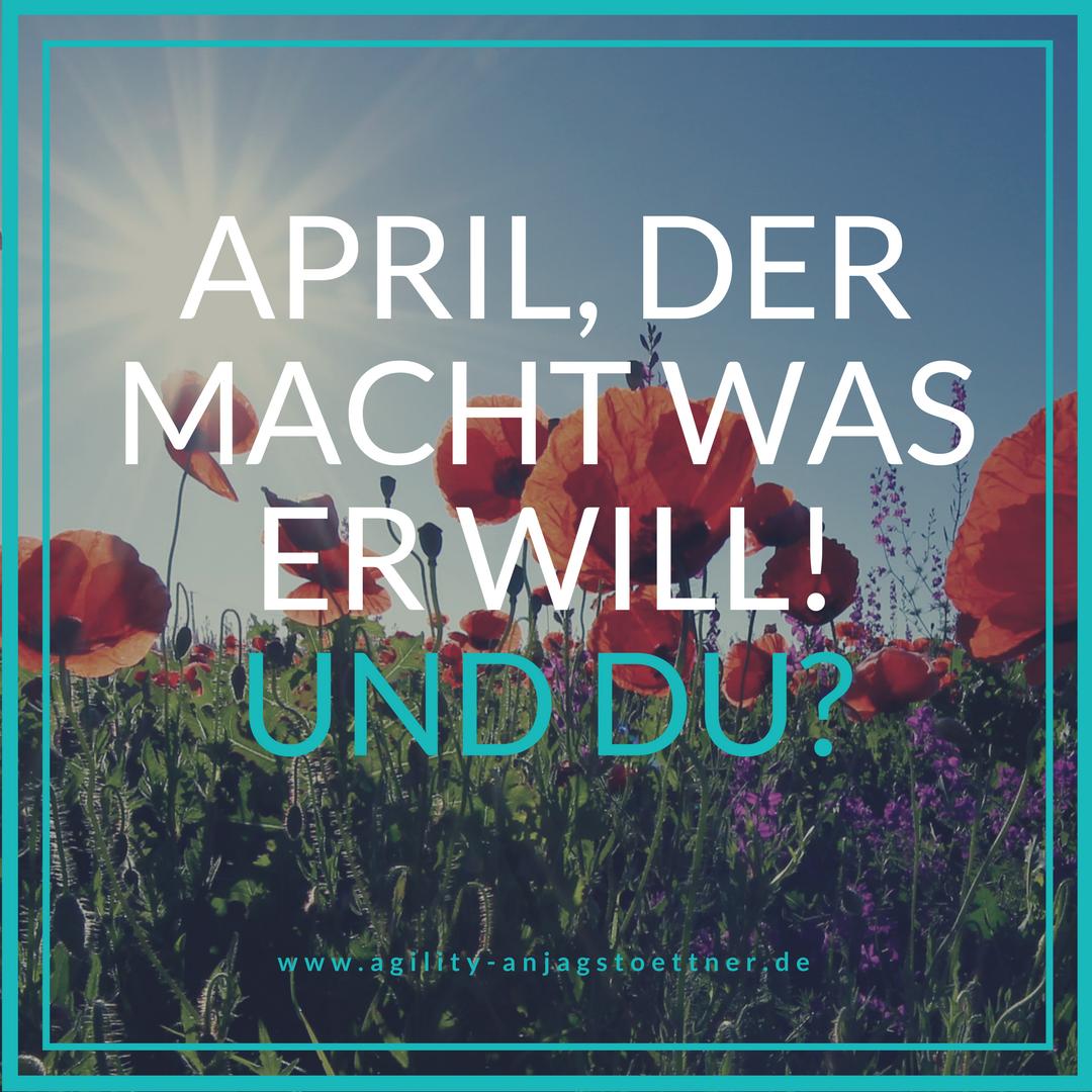 April, der macht was er will! Du auch? - AGILITY - Anja Gstoettner ...