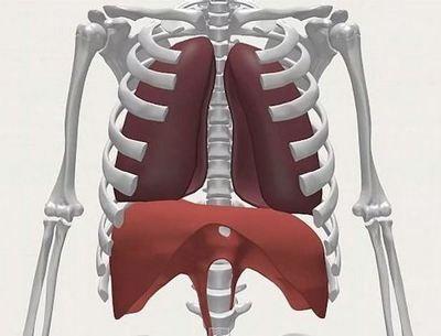 Diaphragme inspir