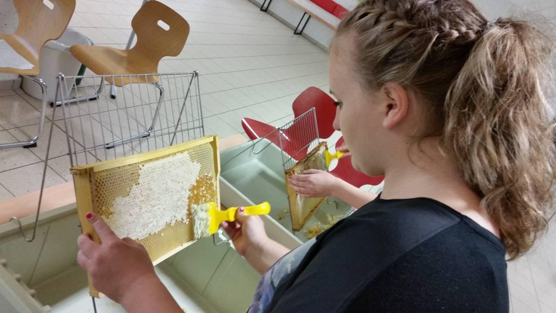 Honigzellen vom Wachs befreien