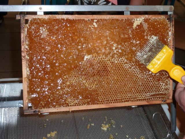 eine entdeckelte Honigwabe