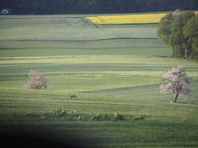 Heimatrevier Kettenbach