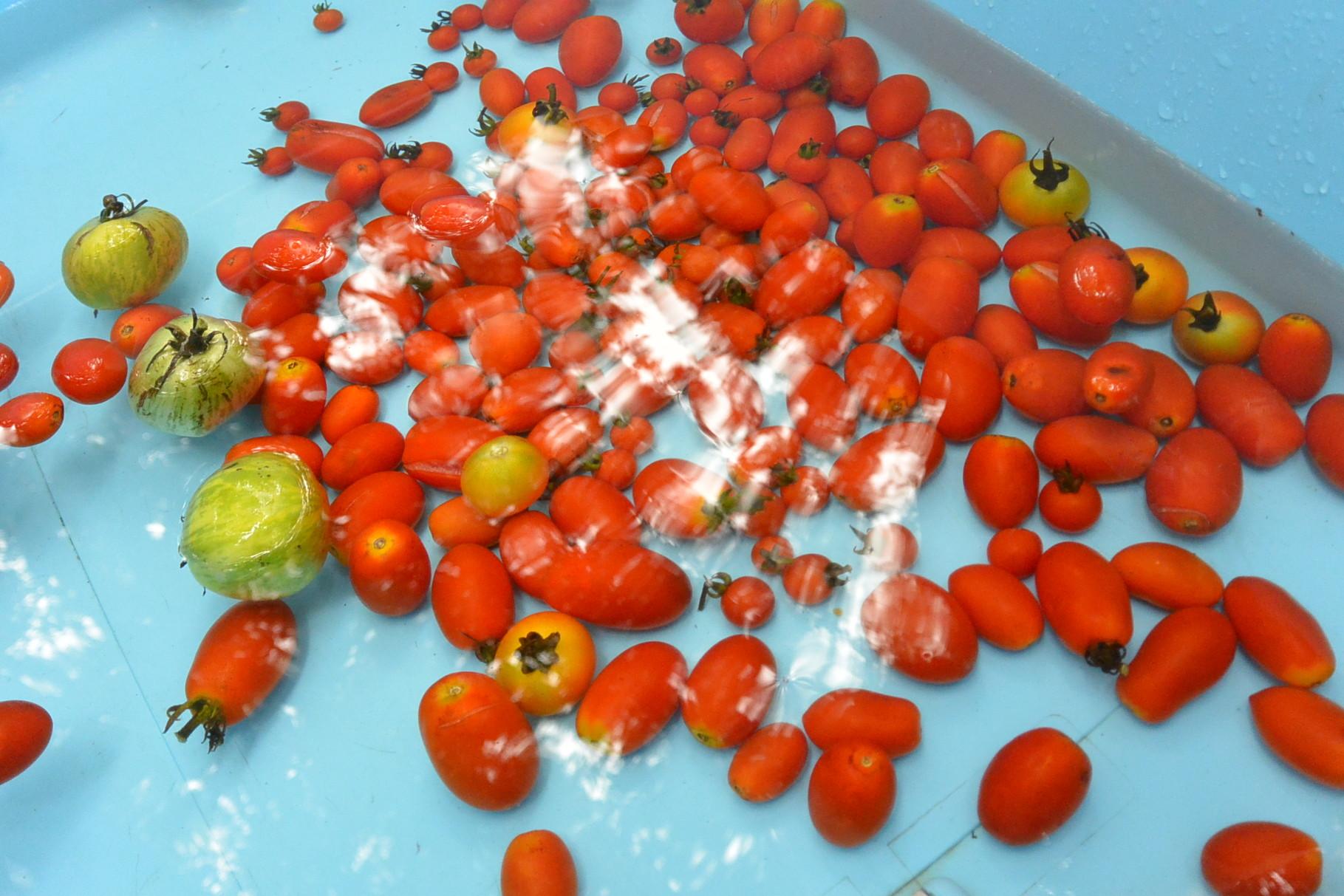 トマトすくい