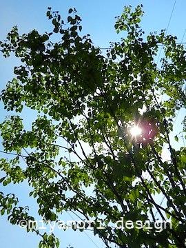 シンボルツリーのヤマボウシ©miyamori design