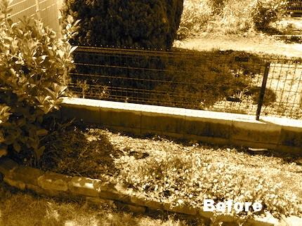 施工前の花壇 既存のガクアジサイ(左)と移植前のハツユキカズラ