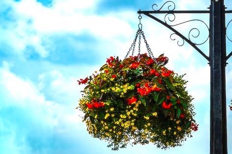 ハンギングバスケットに好きな花を植える
