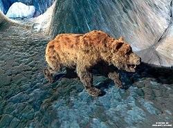 Source de la photographie : http://www.musee-ours-cavernes.com