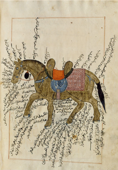 Anatomie et pathologie du cheval Kitâb al-baytara (Traité d'hippiatrie) Égypte, 1766. Papier, 100 f., 33 x 22 cm BnF, département des Manuscrits, arabe 2817, f. 25v © Bibliothèque nationale de France