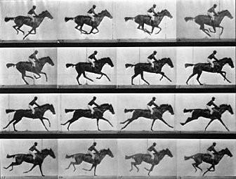 Le galop deDaisy : chronophotographie d'Eadweard Muybridge, 1878.